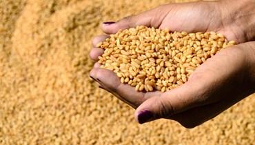 مجلس الوزراء العراقي قرر إرسال 13 ألف طن من القمح إلى لبنان
