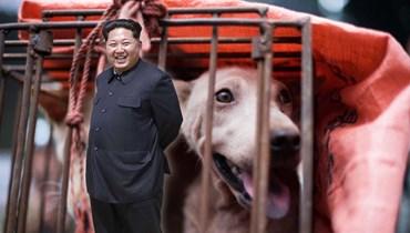 لحوم الكلاب طبق رئيسي على سفرة زعيم كوريا الشمالية