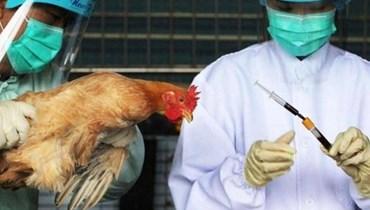بعد الكورونا... إنفلونزا الطيور يضرب الصين