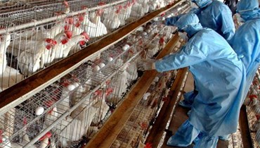 هل يشكّل فيروس انفلونزا الطيور H5N8 خطراً على الإنسان؟