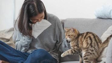 علاج جديد للقضاء على حساسيّة القطط... مادّة تحذف البروتين المسبب للمرض