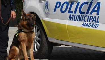 تخفيف التوتر وتحسين المزاج... شرطة إسبانيا تعالج كلابها بجلسات موسيقيّة