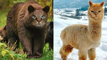 فنّان يحوّل الحيوانات إلى قطط!