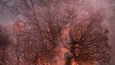 """""""مجموعة درب عكار"""" تُطلق صرختها: """"لن نترك الغابات تحترق ونحن نتفرّج"""""""