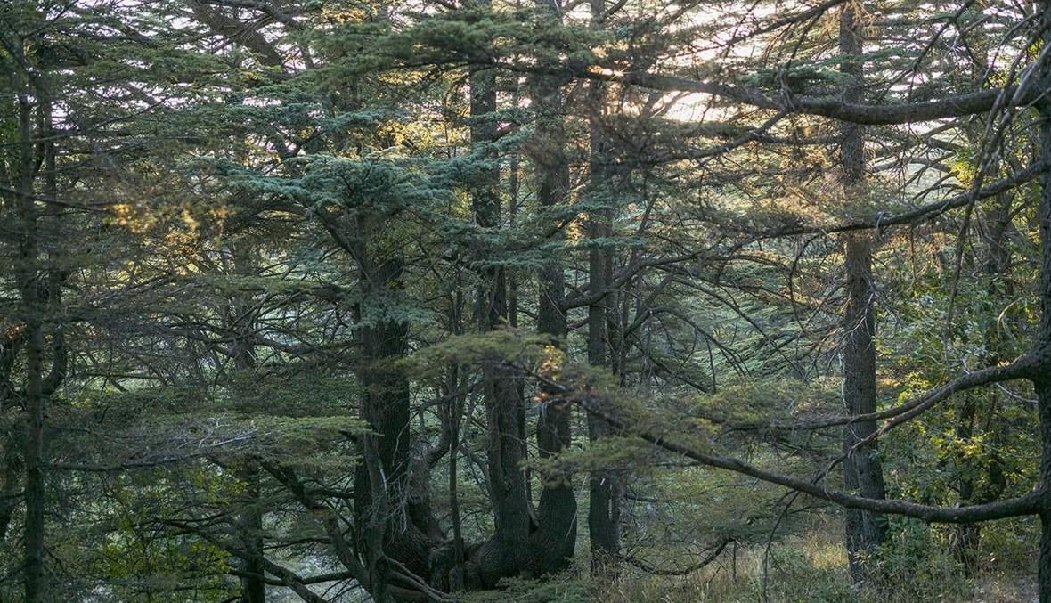 """أشجار """"ع مدّ العين والنظر""""."""