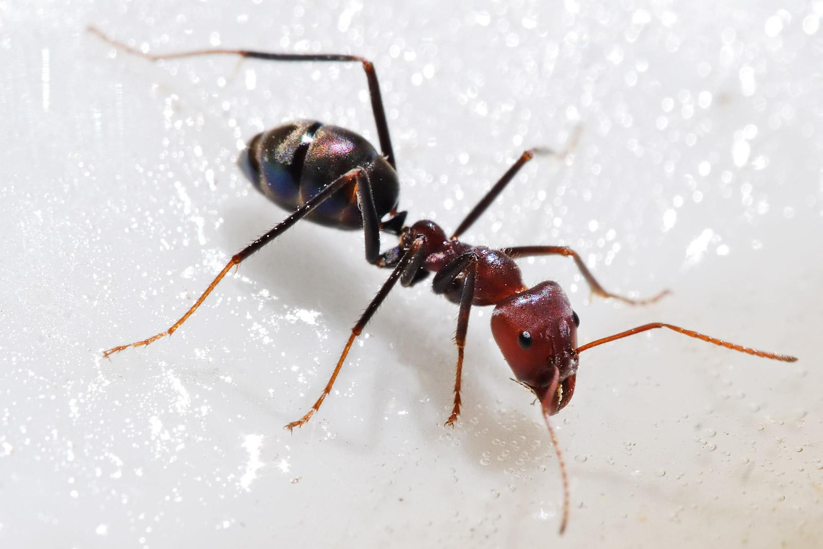 حشرات أكلها الإنسان وتلذ ذ بطعمها هل تخوض النهار